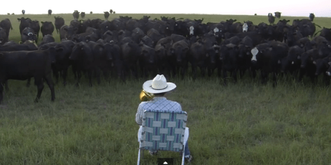 YouTuber farmer proves even cows love Lorde's Royals