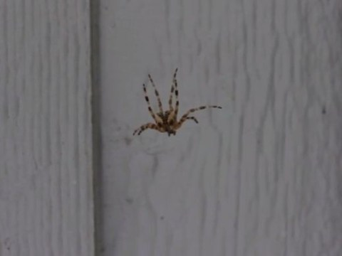 Don't like spiders? Sing at them and this happens…