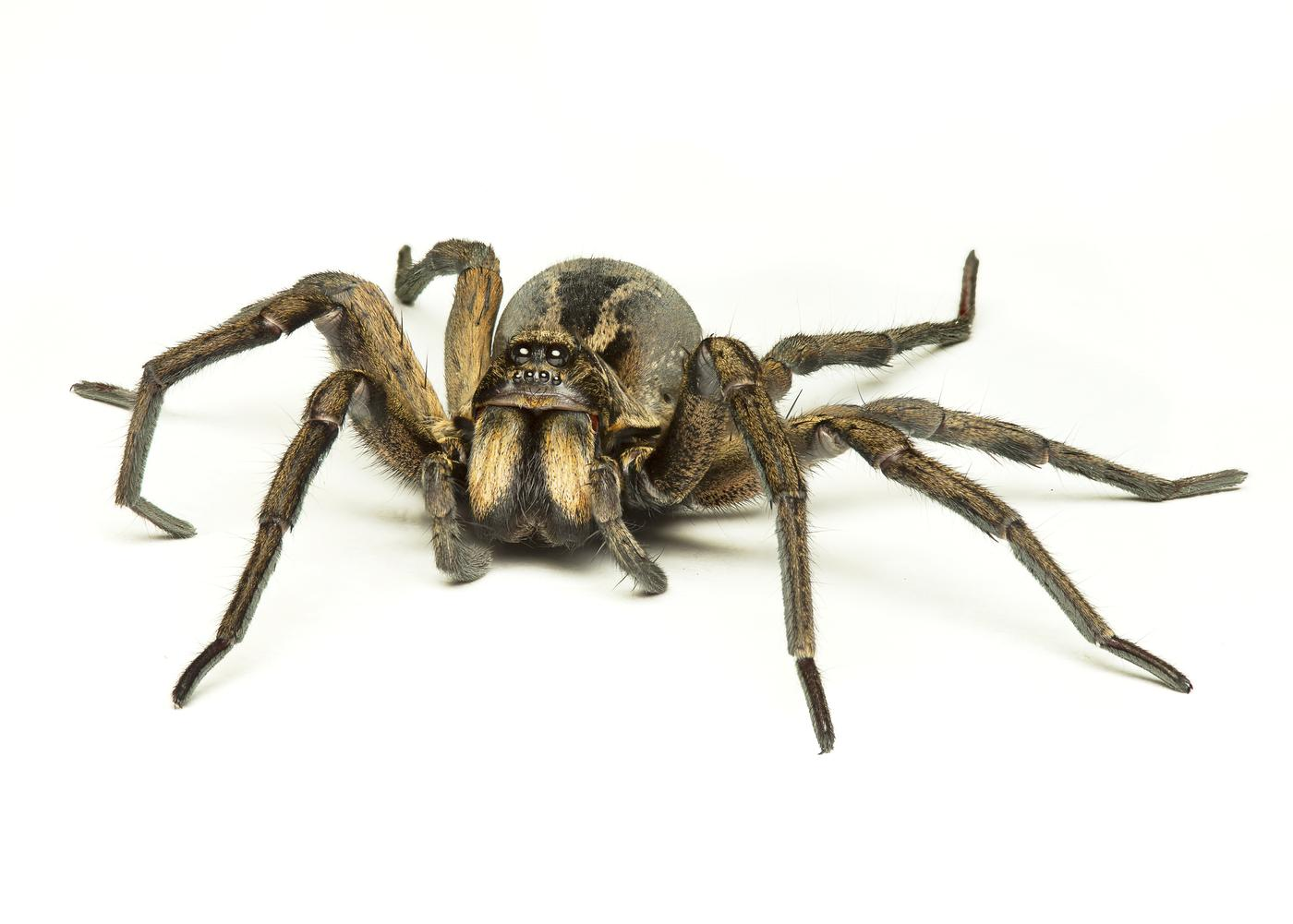 Everybody calm down – at least these 7 spiders aren't in your homes