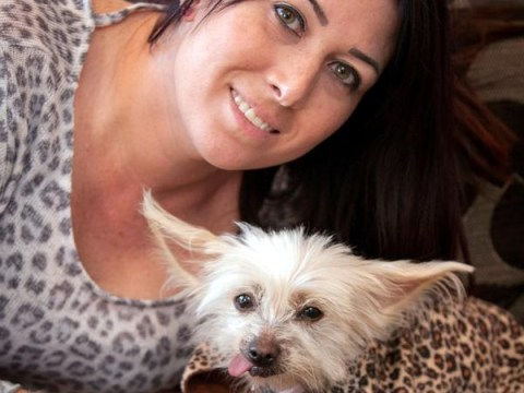 Chihuahua went missing for nine days then turned up at Laura Ashley photo shoot
