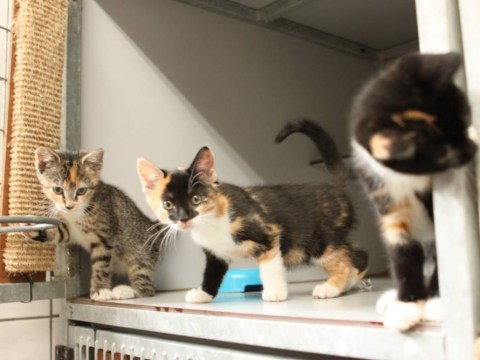 So, there's a houseboat in Amsterdam for stray cats and it's adorable