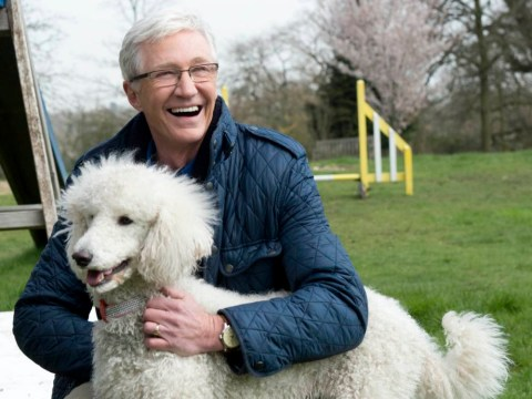 Paul O'Grady: For The Love Of Dogs returns to remind us that rescue dogs are best