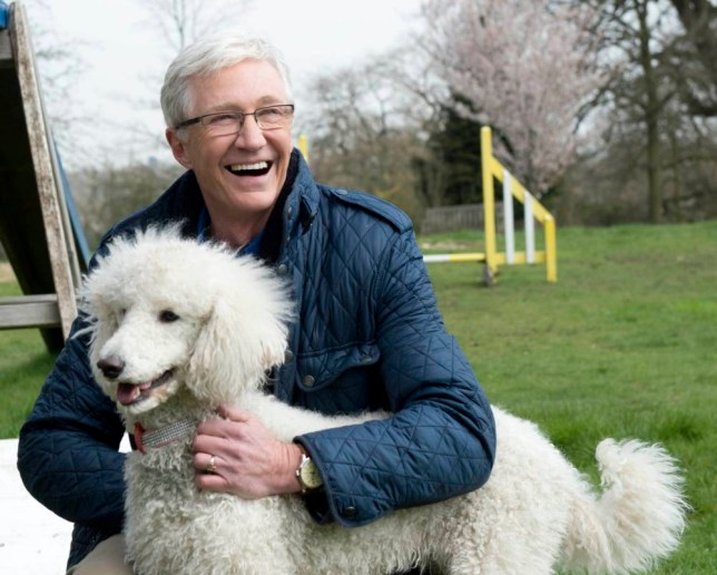 From Shiver Production nnPAUL OGRADYS FOR THE LOVE OF DOGS nFriday 15th August 2014 on ITV nnPictured: Presenter Paul O'Grady with Dougal the poodlennPaul O¿Grady has followed his heart - straight back to Battersea Dogs and Cats home! nnHe¿s ready to welcome the latest residents and this series, to meet even more dogs, he¿s travelling further afield - to Battersea¿s sister sites in Old Windsor and Brandshatch. nnFrom the happy go lucky puppies to the dogs who are lucky to be alive - Paul is on hand to help and occasionally cause mayhem with his beloved canine companions. nnThis week Paul¿s in puppy heaven as he names four newborns and even treats one to a typical O¿Grady misadventure - a personal tour of the local boozer.nnThere¿s a family who believe they¿ve finally found their long lost dog, Roxy. They recognise her but the big test is whether she recognizes them.nnAnd Paul uses his persuasive powers to get a portly Jack Russell to go cold turkey on his cheese addiction.nn© Battersea Dogs and Cats Home nnFor further information please contact Peter Gray n0207 157 3046 peter.gray@itv.com nnThis photograph is © Battersea Dogs and Cats Home  and can only be reproduced for editorial purposes directly in connection with the  programme PAUL OGRADYS FOR THE LOVE OF DOGS or ITV. Once made available by the ITV Picture Desk, this photograph can be reproduced once only up until the Transmission date and no reproduction fee will be charged. Any subsequent usage may incur a fee. This photograph must not be syndicated to any other publication or website, or permanently archived, without the express written permission of ITV Picture Desk. Full Terms and conditions are available on the website n