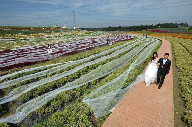 Mandatory Credit: Photo by Imaginechina/REX (4116301a)  A female model wearing the 4,100-meter-long wedding dress walks on a path with a male model  4,100-meter-long wedding dress, Chengdu city, Sichuan province, China - 24 Sep 2014  A 4,100-meter-long wedding dress is seen displayed in a flower field at a scenic spot in Chengdu city, southwest China's Sichuan province. The large tailing dress took a month to make and costs 40,000 yuan. The makers of the dress are attempting to set a new Guinness World Record Guinness for the longest wedding dress.