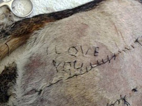 Vet student stitched 'I love you' into a dog he was operating on