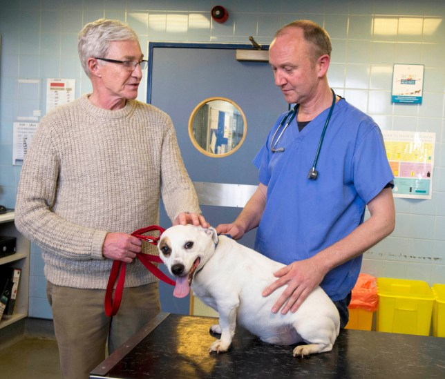 Paul O'Grady, For The Love Of Dogs, Battersea Dogs And Cats Home, Gromit