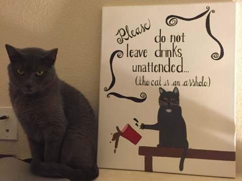 Cat is not happy about being called an 'a**hole' by owners