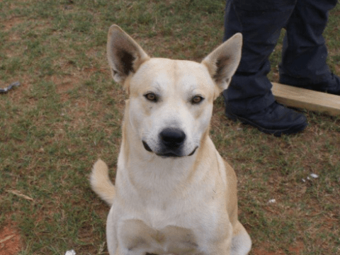 Man's own dog helps police bust him on drug charge