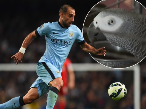 Harry the parrot sings Manchester City songs – Pablo Zabaleta is his favourite
