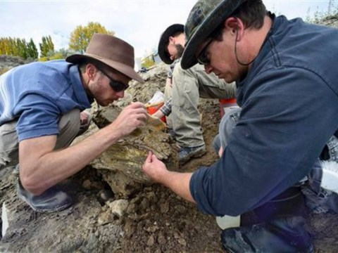 'Complete' mammoth skeleton unearthed