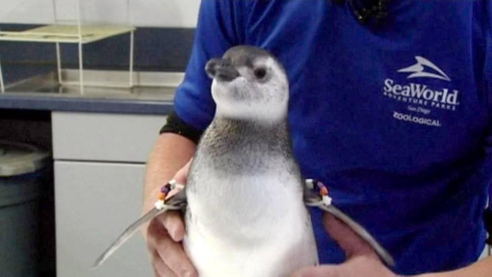 (Picture: SeaWorld)