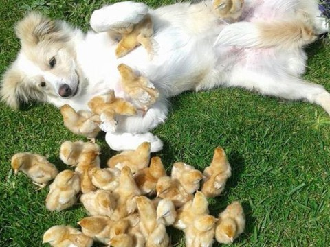 Dog proves chicks love a laid back guy