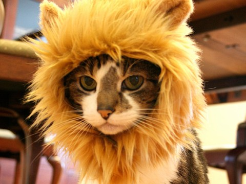 14 incredible things you had no idea you could buy your cat