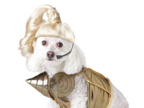 Pup-A-Razzi's pop star dog fancy dress costumes are totally inspired