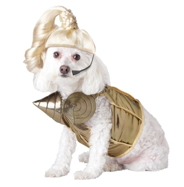Dog costumes, Fancy dress costumes for dogs, Dogs dressing up, Halloween costumes for dogs, Fancy dress, Cheap fancy dress, Halloween costumes, Dog dressed up as Madonna