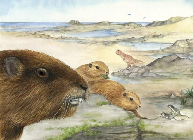 Madagascar Fossil - Luci Betti-Nash