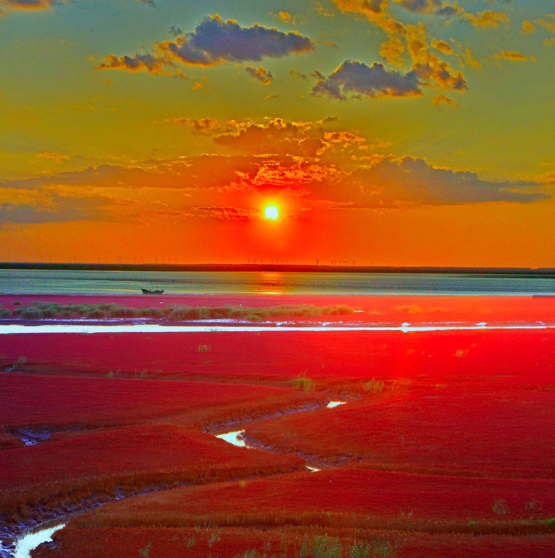 Extraordinary flaming landscape of China's Red Seabeach seashore