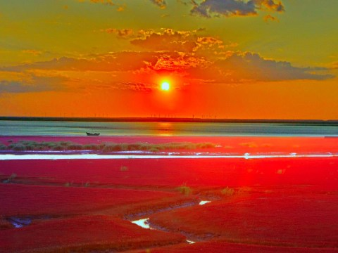 Extraordinary flaming landscape of China's Red Seabeach seashore