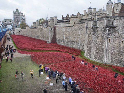 Thieves try to steal poppies being removed from the Tower of London