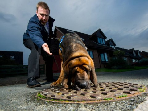 Meet Hector the latest weapon in the battle against fatbergs