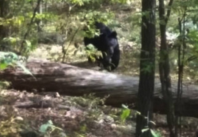 The picture Darsh Patel took as the bear approached (Picture: West Milford Police Department)