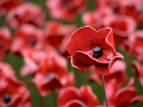 Yodel courier throws Tower of London poppy parcel over garden fence