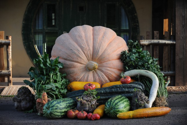 Kevin Fortey's giant vegetables at Alton Towers Crooked Spoon restaurant