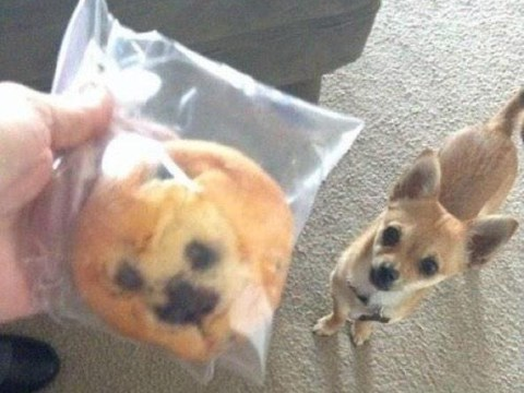 We can't decide if this muffin looks like a dog