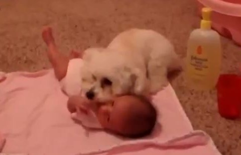 Adorable moment dog protects baby from scary hoover
