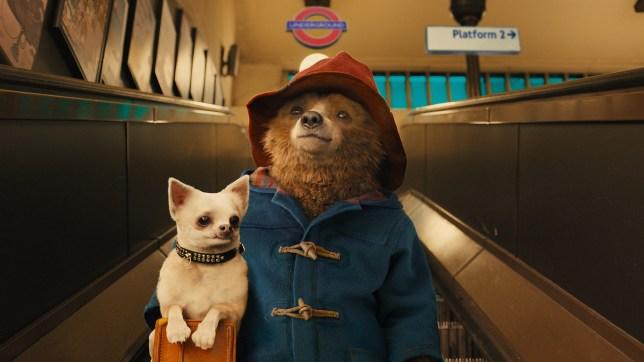 Paddington is getting a sequel (Picture: StudioCanal)