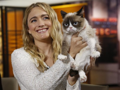 The $100 million cat: Grumpy Cat is now obscenely rich