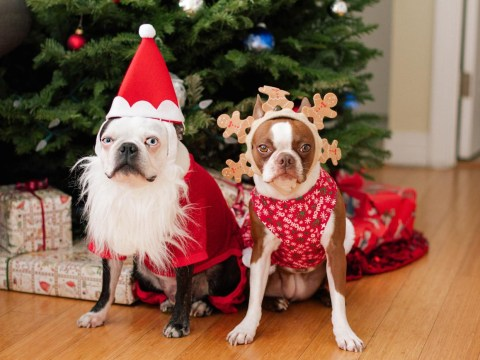 20 dogs who are so ready for Christmas