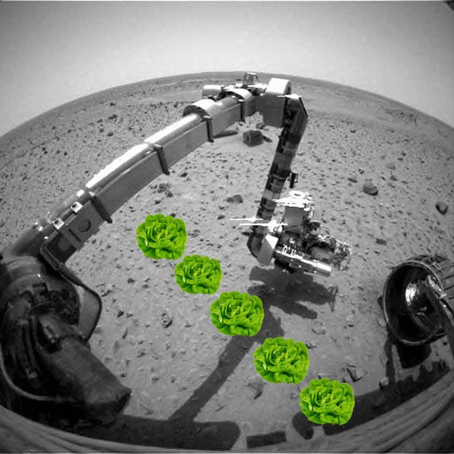 The first Earth lifeform on Mars could be a crisp salad vegetable (Picture: AFP/Metro)