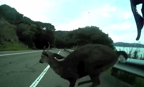 Cyclist cruising at a speedy 30 mph has an uncomfortable collision with a deer