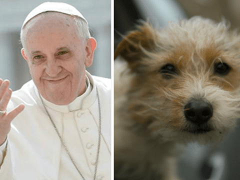 All animals go to heaven, according to the Pope