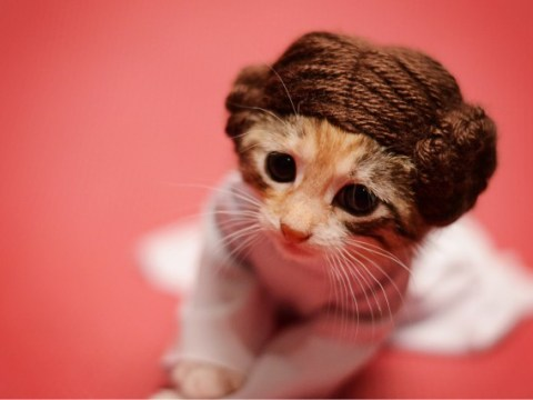Princess Kitty Leia and friends are the cutest cats you'll see all year