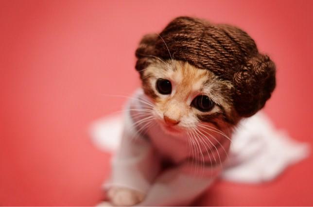 Woman poses kittens for adoption.  Kitten dressed as Princess Leia