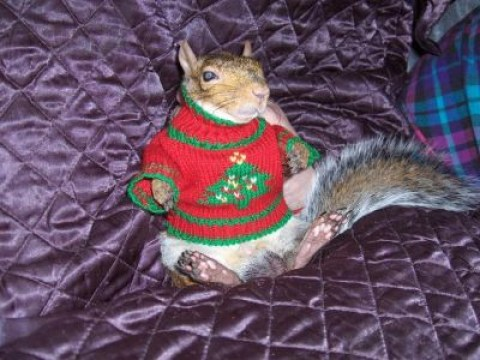 14 animals whose Christmas Jumper Day game is stronger than yours