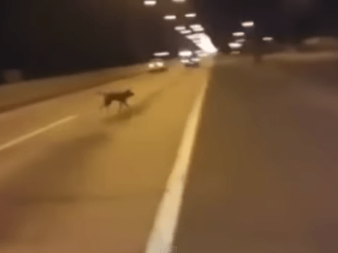 Where on Earth did this dog appear from?