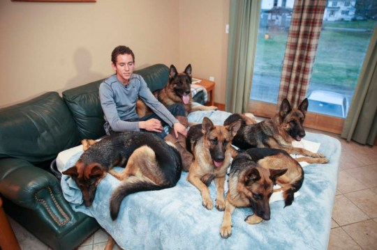 ***EXCLUSIVE - VIDEO AVAILABLE*** BOSTON, MA - DECEMBER 19: Augusto De Oliveira, 23, going to bed surrounded by his  West German shepherds at home on December 19, 2014 in in Houston, Massachusetts. Meet leader of the pack Augusto de Oliveira who can walk huge groups of unleashed German shepherd dogs obediently at his heels. The magical dog trainer, 23, is a web sensation and turns heads wherever he goes - at the head of huge packs of dogs. Augusto lives in Hyannis, USA, but grew up surrounded by dogs on a farm in Brazil where he discovered he could lead groups of dogs with training. Now heís wowing Americans as he walks through their towns and cities showing off the amazing feat. Augusto lives, breathes and sleeps his dogs at the head of his firm Griffin Shepherd Kennels. Augusto made waves on the internet in 2013 after posting a video of himself walking FIVE untethered dogs through the quiet streets of small Hyannis village. Now Augusto has taken the feat to the streets of a major city - upping the stakes with SIX dogs on the streets of busy Boston last month. PHOTOGRAPH BY Laurentiu Garofeanu / Barcroft USA UK Office, London. T +44 845 370 2233 W www.barcroftmedia.com USA Office, New York City. T +1 212 796 2458 W www.barcroftusa.com Indian Office, Delhi. T +91 11 4053 2429 W www.barcroftindia.com