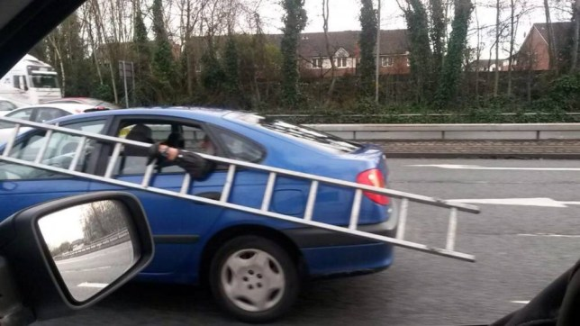 """This car passenger was prepared to go to great lengths to carry his ladders with him - so hung on to them through the WINDOW. See Ross Parry copy RPYLADDER :  The man, who was sitting in the back of a blue Nissan, clung on to the metal steps with his outstretched arm as he travelled on a busy dual carriageway at 50mph. Passing motorists couldn't believe what they were seeing as they witnessed the potentially catastrophic scene. Builder Steve Wignall, who caught the crazed antics on camera, said: """"Okay, it looks funny but I was a bit annoyed."""