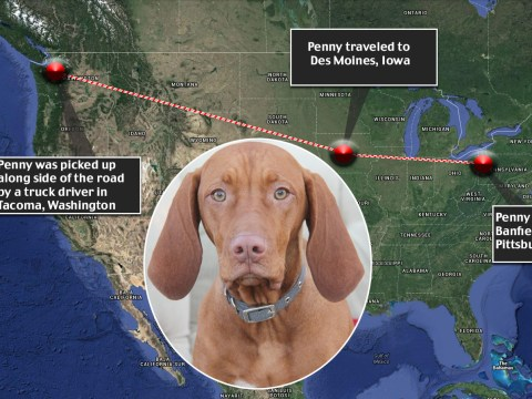 Penny the dog is homeward bound after 2400 mile road-trip across the US