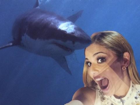 Cheryl Fernandez Versini and husband narrowly escape terrifying shark attack while snorkelling