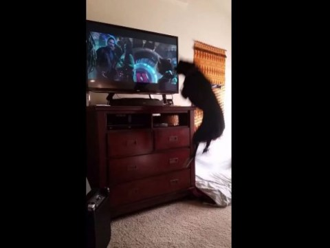 This dog watching Guardians Of The Galaxy on TV is everything