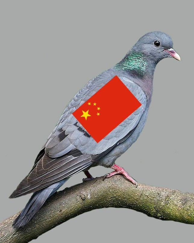 Not a spy, just a pigeon. (Picture: Wikicommons)