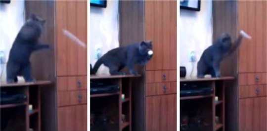 The unnamed Russian blue cat in full swing (Picture: composite from YouTube)