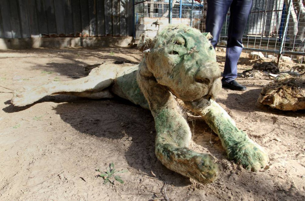 Inside the zoo that has become a graveyard: Animals left to starve to death in Gaza