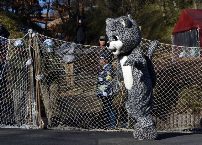 A zoo employee dressed in a snow leopard costume takes part in a drill to practice what to do in the event of an animal escape at the Tama zoo in the western suburb of Tokyo on February 10, 2015. About 70 zookeepers participated in the annual drill.   AFP PHOTO / TOSHIFUMI KITAMURATOSHIFUMI KITAMURA/AFP/Getty Images