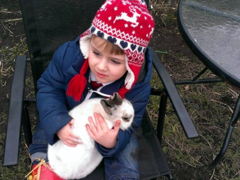 Boy, 4, reunited with pet rabbit after conscience gets better of thief