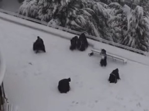 Franciscan monks enjoy a snowball fight in Jerusalem